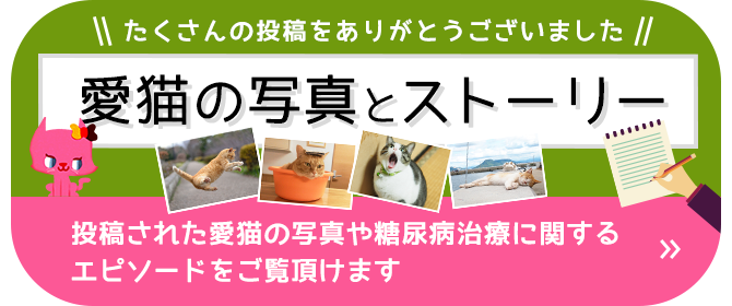 愛猫の写真とストーリー